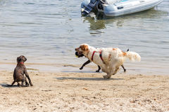 Het spelen op het strand Stock Afbeeldingen