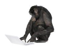 Het spelen van de aap met laptop Stock Foto