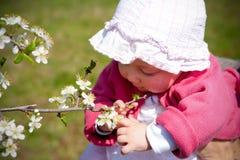 Het spelen van de baby met de lentebloesem Stock Foto's