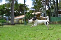 Het spelen van de hond royalty-vrije stock foto