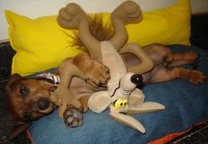 Het spelen van de hond Stock Foto