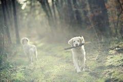 Het spelen van de hond Stock Afbeeldingen