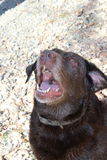 Het spelen van de hond Stock Fotografie