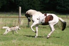 Het spelen van de hond en van het paard stock foto's