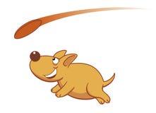 Het spelen van de hond frisbee Stock Foto's