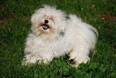 Het spelen van de hond in het gras Royalty-vrije Stock Afbeelding