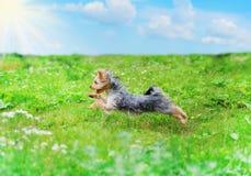 Het spelen van de hond in het park Royalty-vrije Stock Foto's
