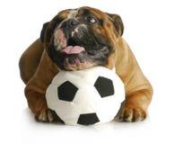 Het spelen van de hond met bal stock foto