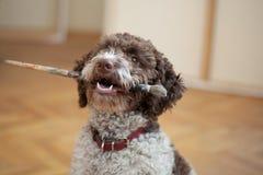 Het spelen van de hond met een verfborstel stock foto