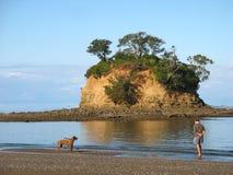 Het spelen van de hond met stok op het strand van Nieuw Zeeland. royalty-vrije stock foto