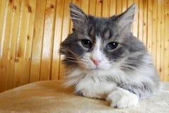 Het spelen van de kat Royalty-vrije Stock Afbeelding