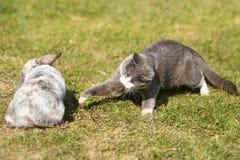 Het spelen van de kat met een konijn Royalty-vrije Stock Foto's