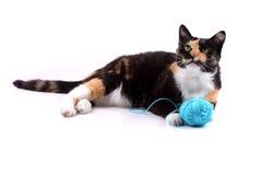 Het spelen van de kat met een wol Stock Foto