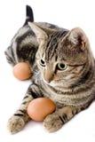 Het spelen van de kat met ei Royalty-vrije Stock Foto