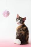 Het spelen van de kat met garen stock afbeelding