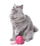 Het spelen van de kat met geïsoleerdn clew stock fotografie