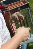 Het spelen van de mens harmonika Stock Foto