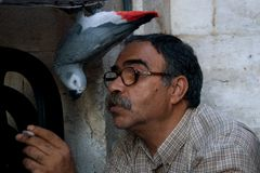 Het spelen van de mens met zijn papegaai. Stock Foto's