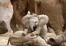 Het Spelen van de Olifanten van de baby Stock Afbeelding