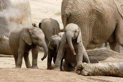Het Spelen van de Olifanten van de baby Royalty-vrije Stock Afbeeldingen