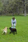 Het spelen van de vrouw met honden Royalty-vrije Stock Foto