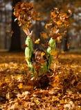 Het spelen van het jonge geitje in de herfstpark Stock Foto's