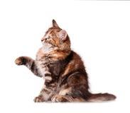 Het spelen van het katje Stock Foto