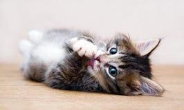 Het spelen van het katje bij de lijst thuis Royalty-vrije Stock Afbeeldingen