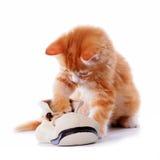 Het spelen van het katje met een laars Royalty-vrije Stock Afbeeldingen