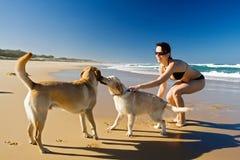 Het spelen van het meisje met honden stock afbeelding