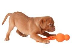 Het spelen van het puppy Royalty-vrije Stock Foto