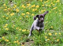 Het spelen van het puppy in het gras Royalty-vrije Stock Foto