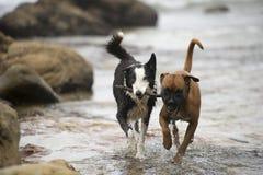 Het spelen van honden   royalty-vrije stock foto