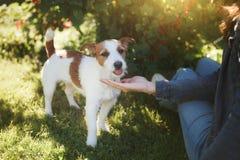 Het spelen van het meisje met een hond Jack Russell Terrier in aard De zomer royalty-vrije stock afbeelding