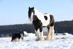 Het spelen van Nice border collie met een paard Royalty-vrije Stock Afbeeldingen