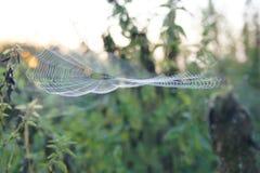 Het spin` s Web Royalty-vrije Stock Foto's