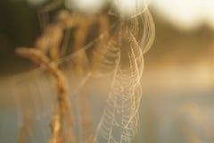 Het spin` s Web Royalty-vrije Stock Fotografie