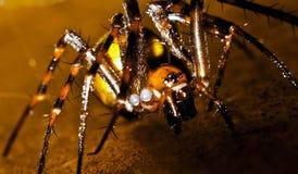 Het spinnenleven Stock Fotografie