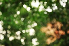 Het spinneweb in de vroege ochtend Stock Foto's