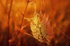 Het spinneweb in eerste stralen Royalty-vrije Stock Afbeelding