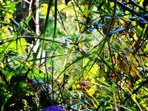 Het spinneweb haalt handen op greeny geelachtig gemengd gras aan royalty-vrije stock afbeeldingen