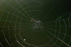Het spinneweb isoleert Bruine achtergrond royalty-vrije stock afbeeldingen