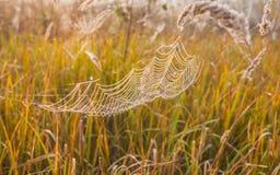 Het spinneweb (spinneweb) Royalty-vrije Stock Afbeelding