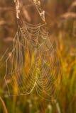 Het spinneweb (spinneweb) Stock Fotografie