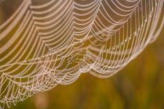 Het spinneweb (spinneweb) Stock Afbeeldingen