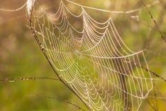 Het spinneweb (spinneweb) Stock Foto