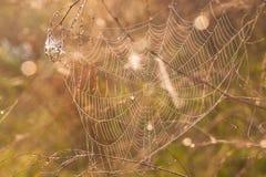 Het spinneweb (spinneweb) Royalty-vrije Stock Foto