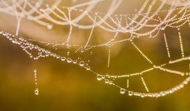 Het spinneweb (spinneweb) Royalty-vrije Stock Fotografie