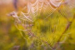 Het spinneweb (spinneweb) Royalty-vrije Stock Afbeeldingen