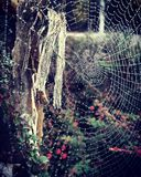 Het Spinneweb van de ochtenddauw Stock Afbeelding